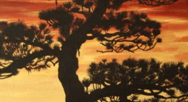 Tory Pine at Sunset